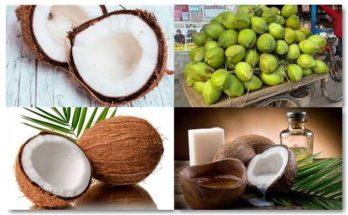 propiedades del coco
